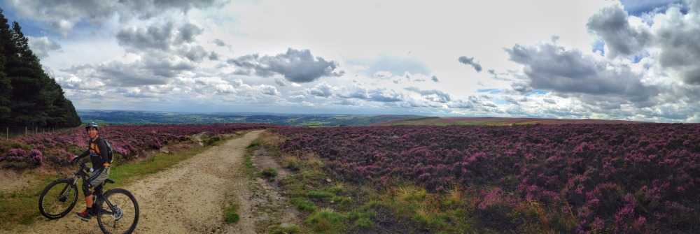 The Peak District turns purple during summer